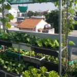 Kệ trồng rau sạch tại TPHCM